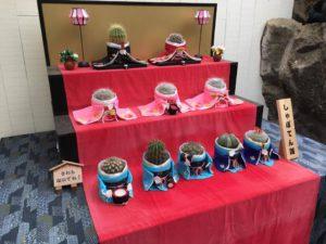 Zabawa motywem - kaktusy hina ningyo
